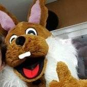 Stefan-Rabbit
